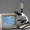 Camera and Monitor are not included. They are shown only to demonstrate the video microscopy capability of this microscope.