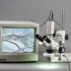 View specimens on your cctv monitor.  Camera for video microscopy included. Monitor not included.