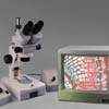 Monitor NOT Included. Camera for live motion video microscopy is included.